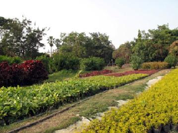 蝴蝶园二馆则是欧式庭院风格,生态沟环绕整个园区,沿著沟渠种满小叶马